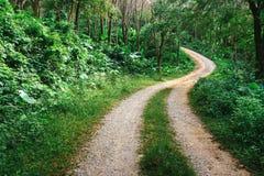 弯曲道路在密林 免版税库存照片