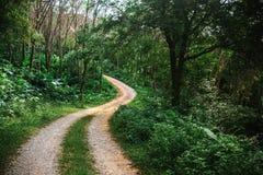 弯曲道路在密林 图库摄影