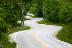 弯曲道路在森林里 库存照片