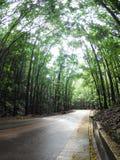 弯曲道路在森林里 免版税库存照片