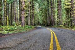 弯曲道路在森林 免版税库存图片