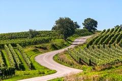 弯曲道路在阿尔萨斯葡萄园里  免版税库存图片