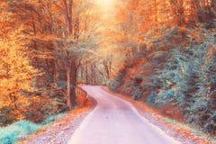 弯曲道路在黄色秋天森林,自然艺术里 免版税库存照片