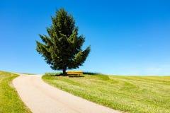弯曲道路导致一棵树和一条长凳在距离,黑森林,德国 库存照片
