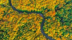 弯曲道路鸟瞰图在秋天的上色了厚实的森林 免版税库存图片