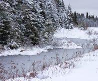 弯曲,冬天,小河 库存照片