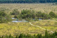 弯曲Tolkuse沼泽,爱沙尼亚供徒步旅行的小道  库存图片