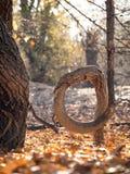 弯的树在森林里在秋天 免版税库存照片