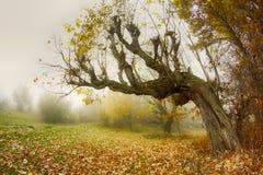 弯的树秋天 免版税图库摄影