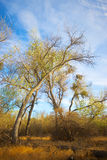 弯的秋天树 库存照片