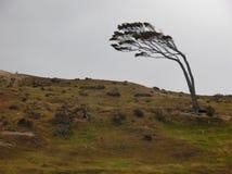 弯的结构树 免版税库存照片