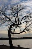 弯的结构树 图库摄影