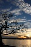 弯的结构树 免版税图库摄影