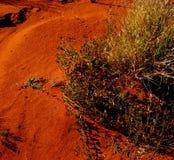 强壮的生活在一片苛刻的沙漠 免版税库存照片