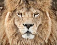 强大野兽 库存照片