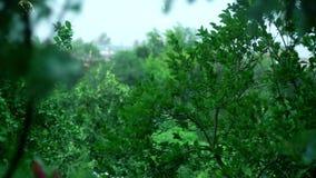 强大风振翼叶子和树 股票视频