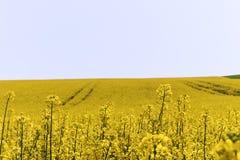 强奸领域在一个晴朗的春日在清楚的蓝天下-捷克 免版税库存图片