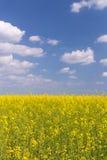 强奸领域在蓝色多云天空下 库存照片