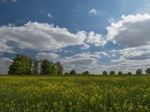 从强奸领域的看法到与多云天空的一个风景 免版税库存图片
