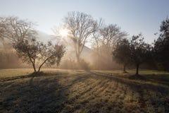 强有力的太阳通过薄雾发出光线切口在黎明,在中间 库存图片