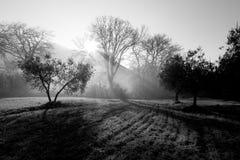 强有力的太阳通过薄雾发出光线切口在黎明,在中间 免版税库存图片