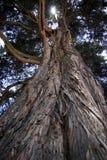 强有力的树 免版税库存图片