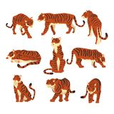 强有力的老虎用不同的行动设置了动画片在白色背景的传染媒介例证 图库摄影