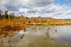 强湿地 库存照片