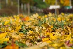 强烈地在草甸的明亮的秋叶 免版税图库摄影