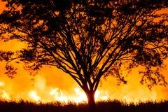 强烈的火围拢的树 图库摄影