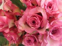 强烈的颜色美丽的花和巨大秀丽 库存照片