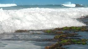 强的海浪洗涤与绿色海草的棕色岩石 股票视频