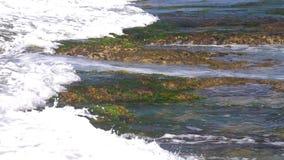 强的海浪洗涤绿色海草和棕色珊瑚礁 股票视频