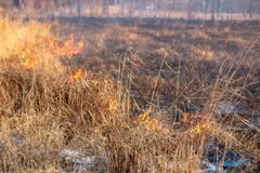 强的火在风暴传播通过干草 免版税库存照片