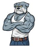 强的肌肉积极的牛头犬 库存照片
