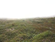 强的雾在寒带草原, Soroya海岛,挪威 股票视频