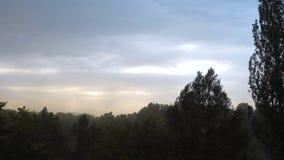 强风和雨震动了树 影视素材