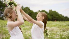 强风女孩花缠绕开花草甸 影视素材