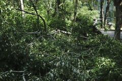 强风敲了在树,在大厅下 库存图片