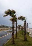 强风从海吹并且弯曲在海岸的棕榈 免版税库存照片