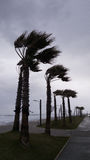 强风从海吹并且弯曲在海岸的棕榈 免版税库存图片