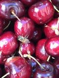 当一只小的蜂遇见大时估量樱桃 免版税库存图片