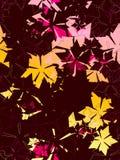 当代花卉模式 库存图片
