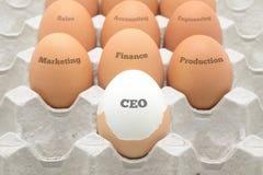 当公司组织被设定的鸡蛋 图库摄影