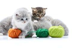 当其他全部赌注使用与绿色羊毛球时,小灰色蓬松可爱的小猫使用与橙色毛线球 免版税库存照片