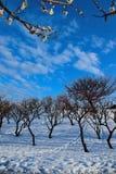 当冬天在日本见面春天 库存图片
