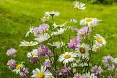 当地夏天花美丽的花束  库存图片