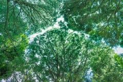 当地新西兰灌木机盖 图库摄影