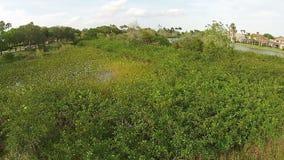 当地植被在佛罗里达 股票视频