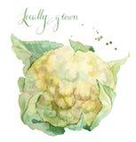 当地被种植的花椰菜 免版税库存照片